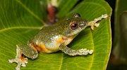 Žáby-věděli jste, že váš dotyk pro ně může být smrtelný?