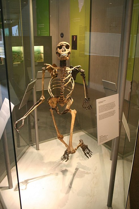Kostra z Muzea neandertálců v Mettmanu