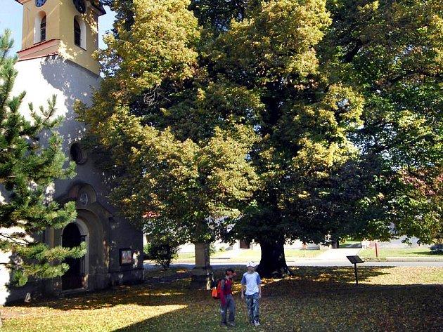 Stojanova lípa z Beňova na Přerovsku se stala Stromem roku 2007.