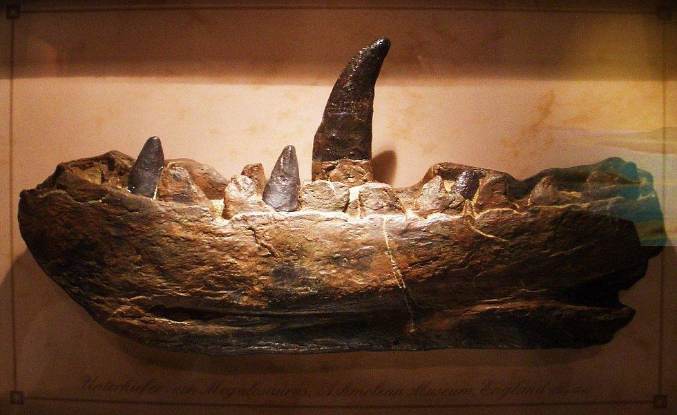 Části kostry Megalosaura