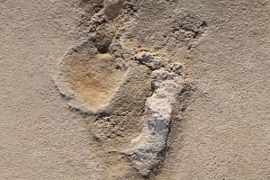 Jedna z pravěkých stop, která může být starší než šest milionů let