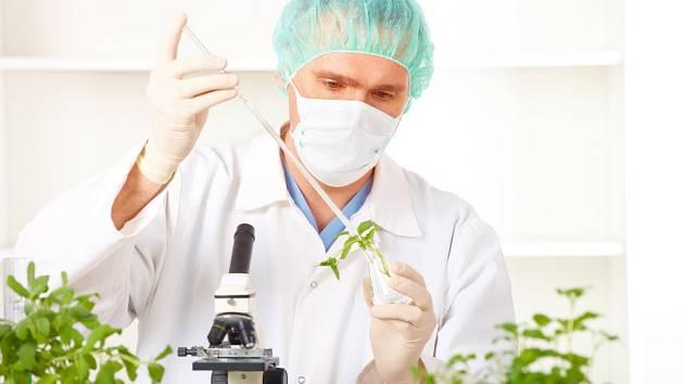 Geneticky modifikované rostliny - Ilustrační foto