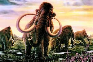 VYHYNULÝ VELIKÁN. Mamuti žili na zemi miliony let. S ústupem poslední doby ledové vyhynuli, kromě klimatických změn jejich osud pravděpodobně zpečetili i pravěcí lovci.