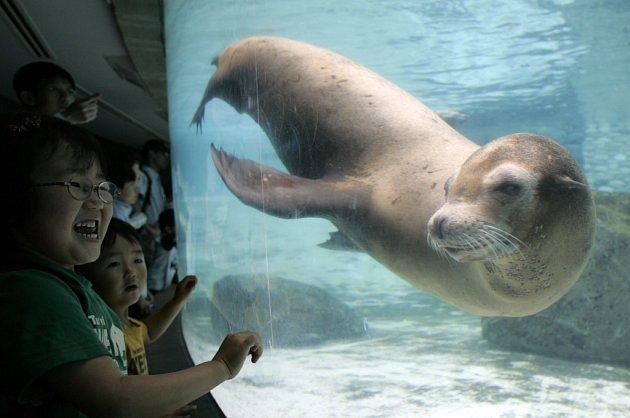 Tuleni jsou až na výjimky mírumilovná stvoření, jejichž největším nepřítelem je člověk.