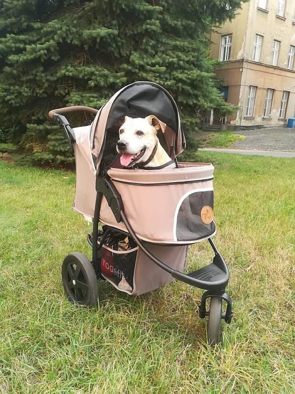 Tak takhle řeším pohybové potíže starého psa. Pejsek má stále chuť do života, a nějaká artróza nás nemůže porazit. Všechna nemocná zvířátka zdraví Brenda.