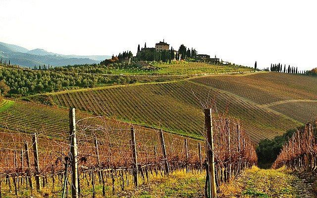 Italské vinice, ilustrační foto