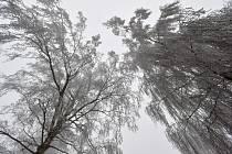 Stromy pokryté námrazou. Ilustrační snímek