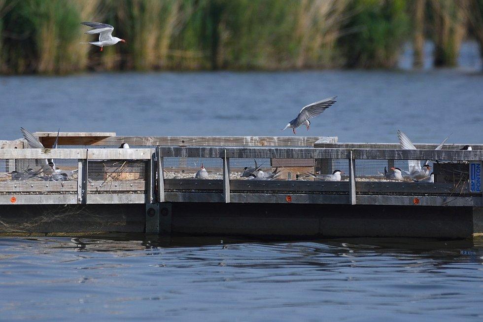 Rybáci na nádrži Nové mlýny.