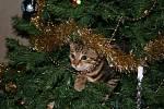 Zvířata v období vánočních svátků