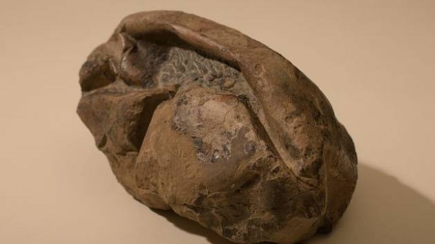 V roce 2011 našli vědci v Antarktidě záhadnou fosilii připomínající kožený fotbalový míč. Zřejmě jde o vejce