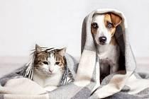 I o zdraví mazlíčků je třeba řádně pečovat.