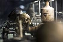 Prohlídka výstavy Smrt v Národním muzeu proběhla 19. března v Praze.