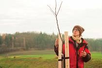 Stromy potřebují od zasazení alespoň pět let kvalitní kotvení, ochranu proti zvěři, zálivku, mulčování a pravidelný řez, říká Dominik Grohmann.