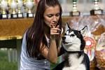 Pes se na výstavě musí chovat slušně, tedy že musí být dobře socializovaný a zvladatelný.