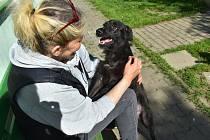 Po dvou měsících v klatovském útulku je fenka Nela již v dobrém stavu a může jít do rodiny.
