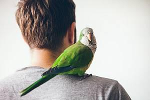 Papoušek si mnohdy vybere jednoho oblíbence. Ostatní přehlíží.