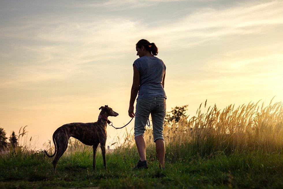 Péče o chrta v běžném životě není nijak extrémně náročná. Nutností jsou pravidelné procházky, ale velice rádi si užívají lenošení v teple domova