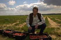 Tomáš Jarolím z Předměřické, a.s., s jahodami, které tu pěstují na osmatřiceti hektarech.