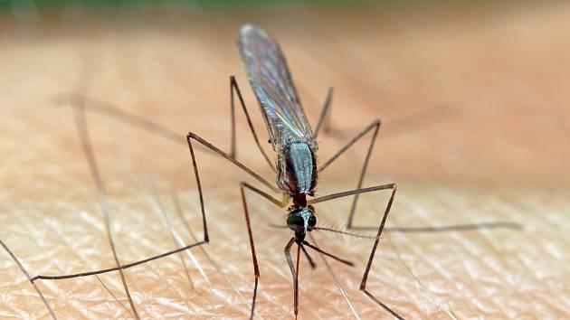 Malárie. Tropický mor. Jejím přenašečem jsou komáři druhu anopheles.