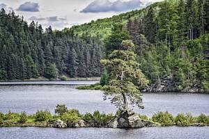 Chudobínská borovice z Vírské přehrady