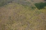 Pohled na spoušť, kterou napáchal před orkán Kyrill v lednu roku 2007 poblíž rozhledny Poledník v Národním parku Šumava.