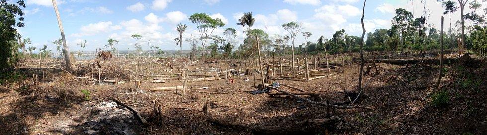 Amazonský prales likviduje nelegální těžba a vypalování