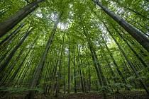 Stromy. Ilustrační snímek