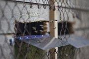 Vkategorii Kutil zvítězil Tomáš Nezval sprojektem BeeSpy, citlivou digitální váhou sloužící včelařům kmonitorování včelstev a množství medu vúlech.