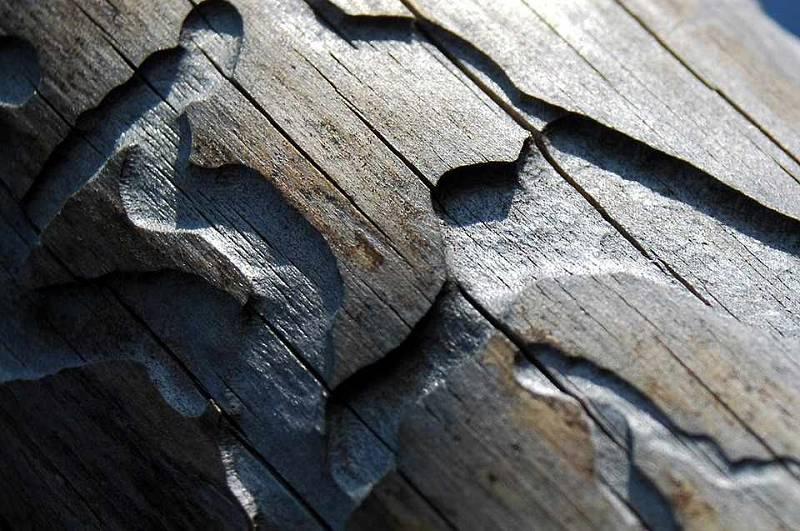 Cestičky kůrovce ve dřevě