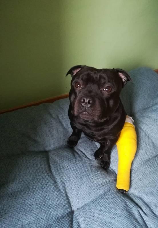 Náš Adeo pro komplikované operaci levého kolene.