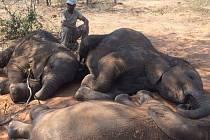 V jihoafrické Botswaně našli 87 zabitých slonů
