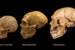 Srovnání lebky denisovana, neandrtálce a příslušníka rodu homo sapiens