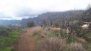 Gran Canaria. Pozůstatek lesa, přes který se před nedávnou dobou přehnal požár. Rychle se zde uchytila nová vegetace.