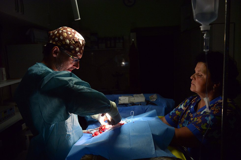 Veterinář Roman Skala na Veterinární klinice Na Hrádku v Praze. Šestiletá fenka Žiži podstupuje ortopedickou operaci přetrženého předního zkříženého vazu kolene.