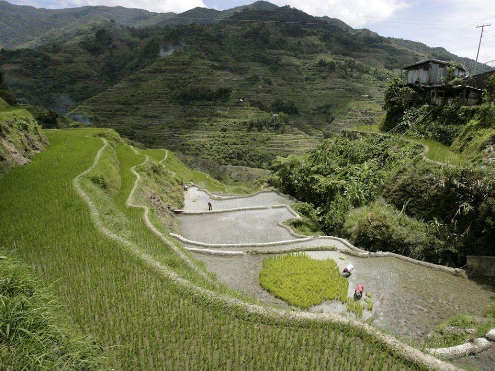 Terasy s rýžovými poli ve filipínské provincii Ifugao severně od Manily. Cena rýže stoupla od konce roku 2007 na Filipínách o více než 30 procent.