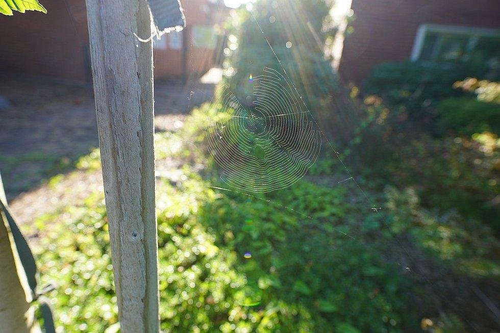 Pavoučí síť prozářená sluncem, v blízkosti lesního srubu nedaleko Vancouveru