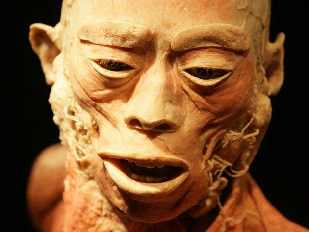 Výstava The Human Body v Praze
