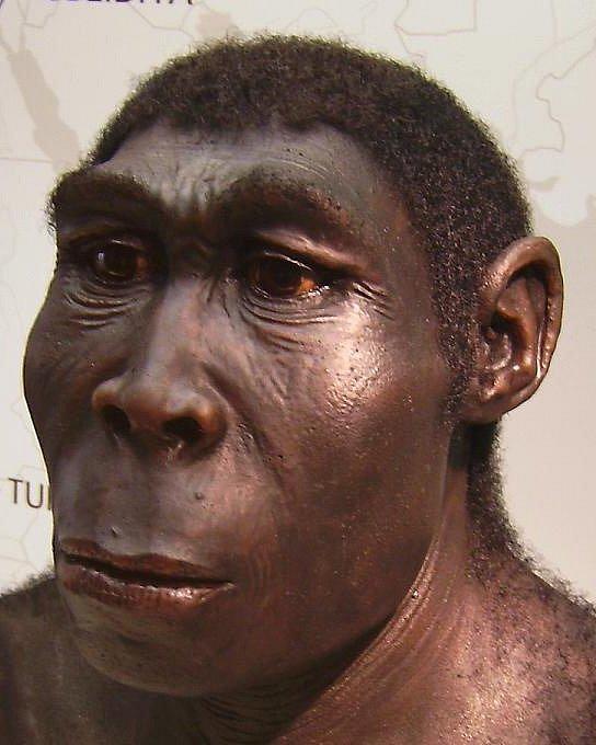 Forenzní rekonstrukce tváře dospělého muže Homo erectus.