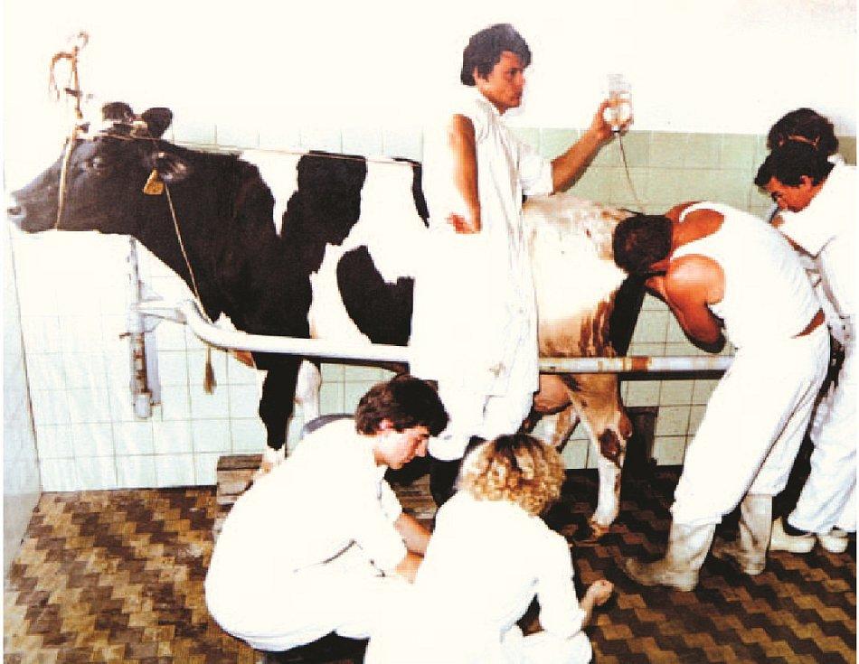 Veterináři. Svou činnost postavili na zemědělství,ale i třeba výpočetní technice