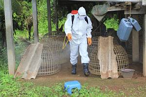 V Číně se objevil první případ, kdy se člověk nakazil kmenem ptačí chřipky H10N3.