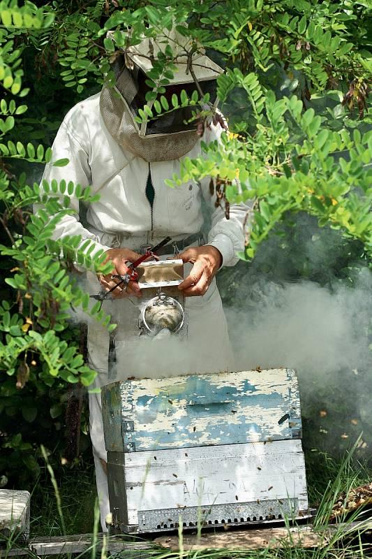 """""""Chraň svá včelstva před průvanem a sluncem,"""" zní jedno z pravidel dobrého včelaře."""