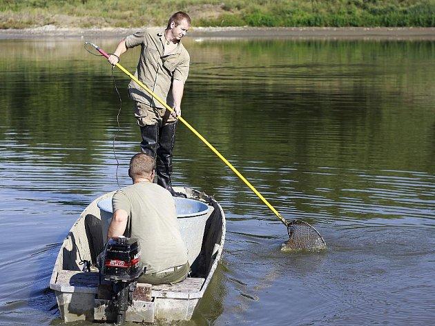Odlov ryb v laguně u Valáška na revitalizované plumlovské přehradě začal v neděli po osmé ráno.