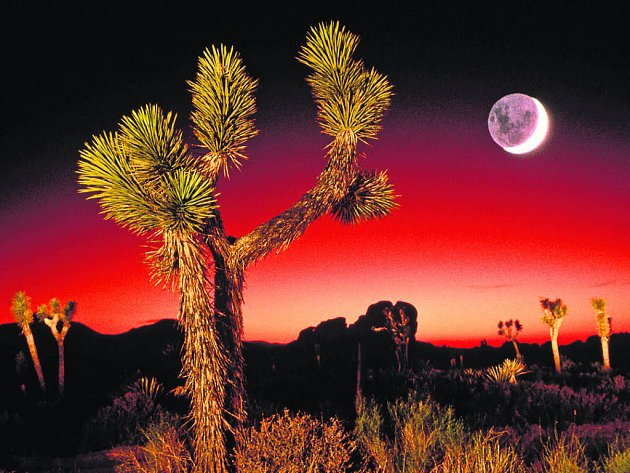 Možnost pěstovat rostliny na Měsíci by usnadnila pobyt ve vesmíru.