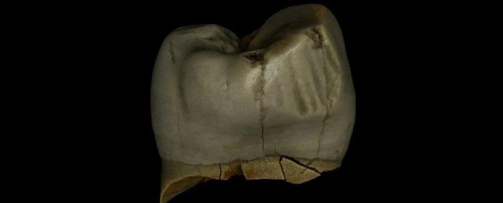 Stolička neandertálce s radiálními drážkami vzniklými opotřebováním