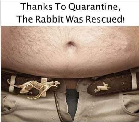 Díky karanténě byl zajíc zachráněn.