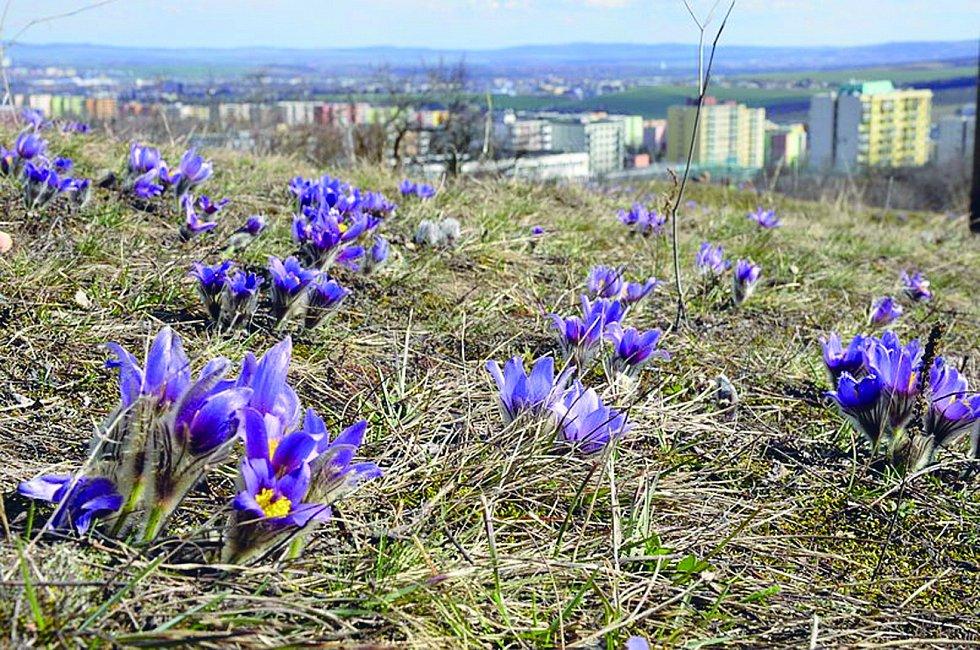 Přírodní rezervace Kamenný vrch se rozkládá v městských částech Nový Lískovec a Kohoutovice.