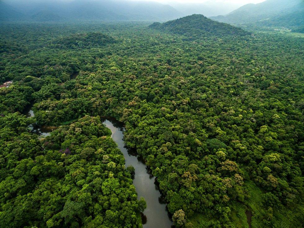 Amazonský deštný prales