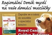 Zapojte se s námi do soutěže o speciální krmivo  ROYAL CANIN GOLDEN RETRIEVER 3kg.