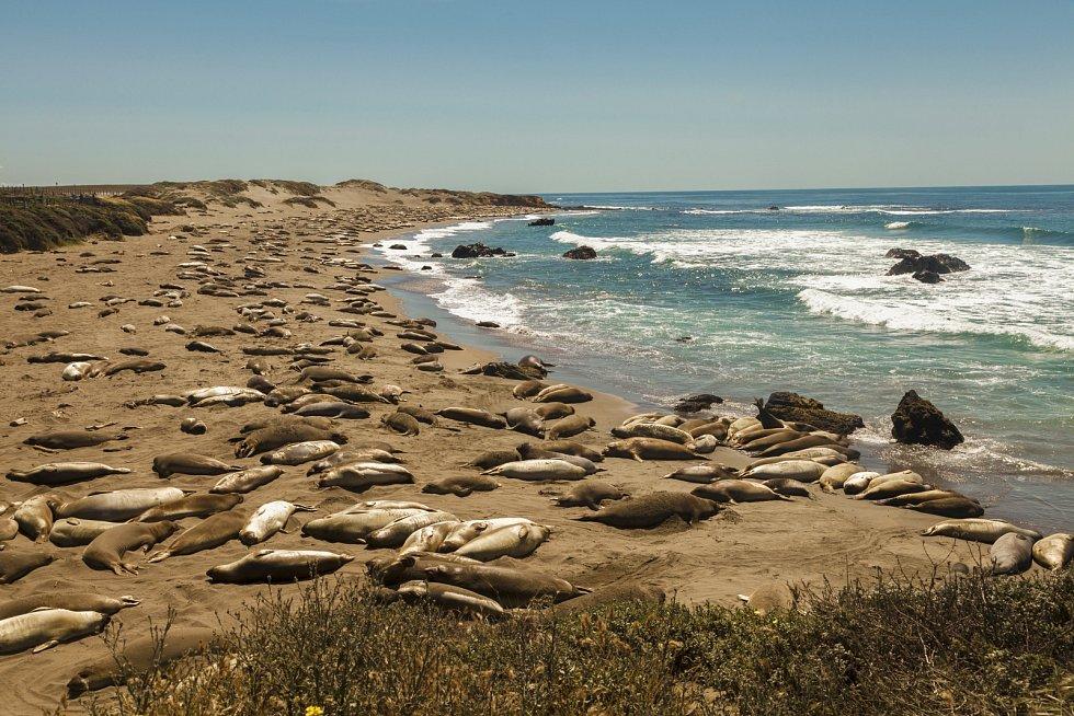 Na pobřeží Kamčatky hyne mořský život, podle potápěčů uhynulo téměř všechno, co žije v hloubce od pěti do deseti metrů