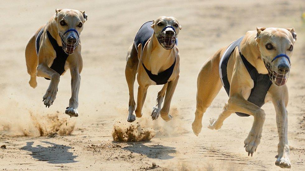 Na dráze. V České republice se běhá především na trávě. V Anglii jsou oblíbené pískové tratě.
